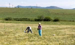 Έρχεται το ηλεκτρονικό δελτίο αξιολόγησης για τους νέους αγρότες