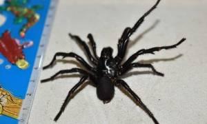 Απίστευτο: 10χρονος επέζησε από το τσίμπημα της πιο θανατηφόρας αράχνης στον κόσμο! (pics)