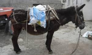 Απίστευτη σύλληψη στη Φλώρινα: Μετέφερε  313 κιλά κάνναβης με... γαϊδούρια