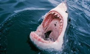 Viral: Λευκός καρχαρίας έκανε επίθεση σε σέρφερ!