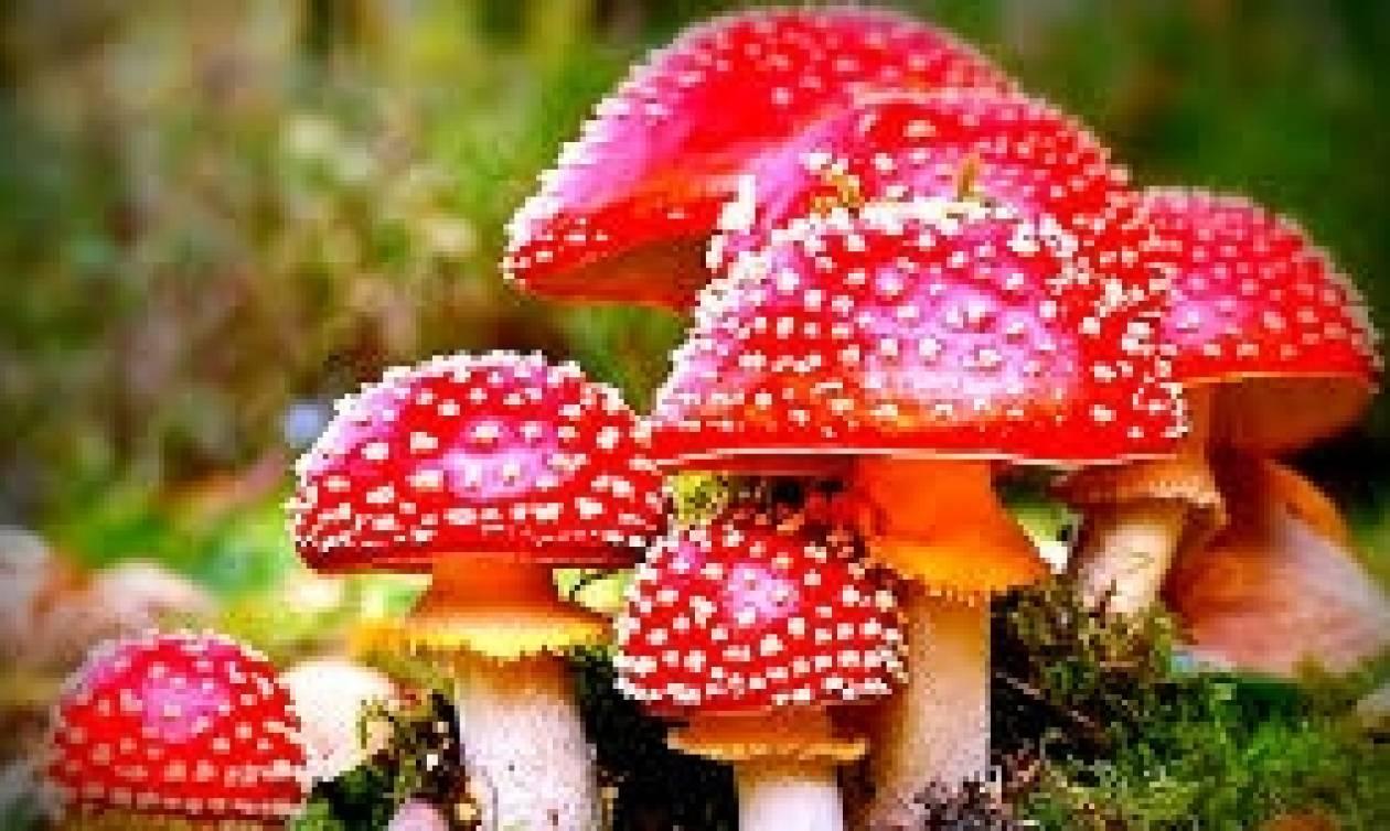 Magic Mushroom Menu στο CHEFI – Πέμπτη 2 Μαρτίου