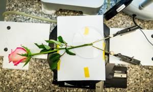 Ελληνίδα δημιούργησε το πρώτο ηλεκτρονικό… τριαντάφυλλο!