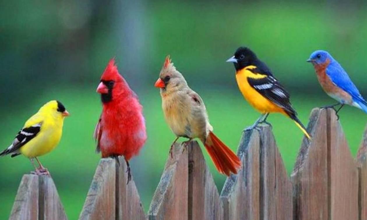 Ένα πουλί την ημέρα, τον ψυχολόγο κάνει πέρα!