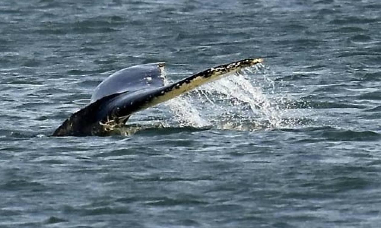 Νόμιζαν ότι έβλεπαν το τέρας του Λοχ Νες. Τελικά το θαλάσσιο πλάσμα ήταν... (video)
