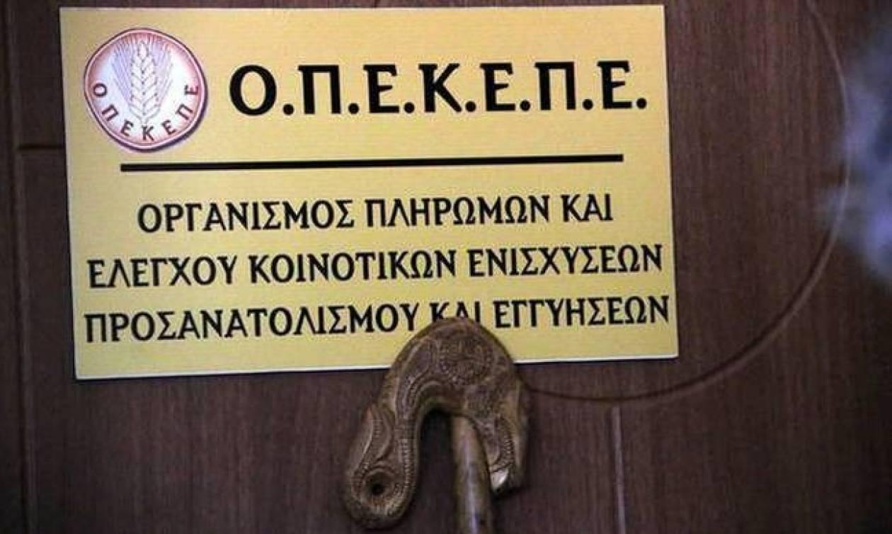 ΟΣΔΕ: Πότε ξεκινά η περίοδος υποβολής των δηλώσεων από τους παραγωγούς