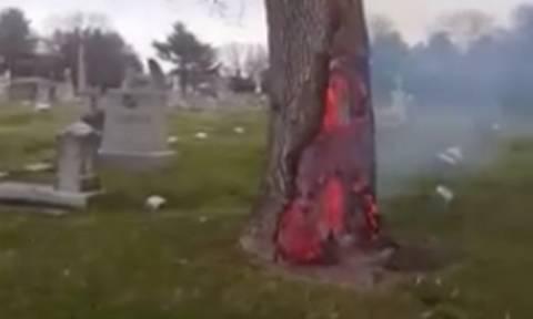 Τρόμος στο νεκροταφείο: Είναι αυτό το δέντρο η πύλη για την κόλαση;