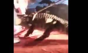 Βίντεο - σοκ: Κροκόδειλος αρπάζει από το κεφάλι άνδρα σε τσίρκο!