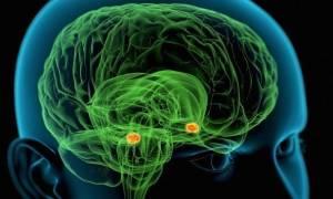 Επιστήμονες εισέβαλαν για πρώτη φορά στο μυαλό ενός… δολοφόνου!