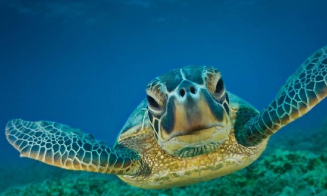 Φρίκη στη Νάξο: Αποκεφάλισαν δέκα θαλάσσιες χελώνες - Αναζητούνται οι δράστες