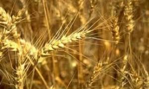Η Τουρκία επιβάλλει εμπάργκο στις εισαγωγές σιτηρών από την Ρωσία