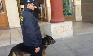 Σκύλοι «ντετέκτιβ» στους δρόμους της Θεσσαλονίκης (vid)