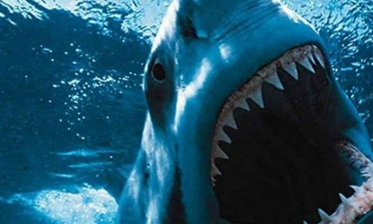 Τρόμος – Γέμισε καρχαρίες ο Αργολικός κόλπος: Ιδού η απόδειξη (pics-vid)