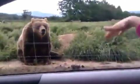 Ενα ζευγάρι είδε μια αρκούδα και την χαιρέτησε! Αυτό που τους έκανε δεν θα το ξεχάσουν ποτέ (video)