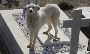 Άρτα: Σκυλίτσα ζει δίπλα στον τάφο του κηδεμόνα της εδώ και δύο μήνες