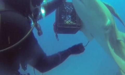 Εντυπωσιακό: Καρχαρίας «ζητά» από δύτη να τον σώσει! (vid)