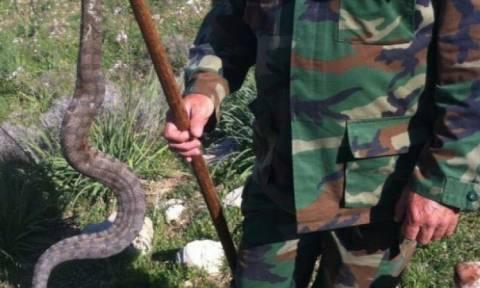 С приходом весны на Кипре выросла опасность укусов ядовитых змей
