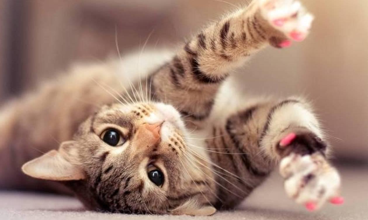 Ακόμα και ο κτηνίατρος έπαθε σοκ, με αυτό που εντόπισε στο αυτί μιας γάτας (video)