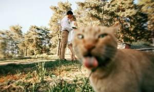 Viral: Σαράντα ξεκαρδιστικές στιγμές που εγωμανείς γάτες έκαναν photobomb στην τέλεια φωτογραφία