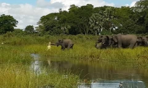 Σοκαριστικό βίντεο: Κροκόδειλος αρπάζει ελέφαντα από την προβοσκίδα (video)