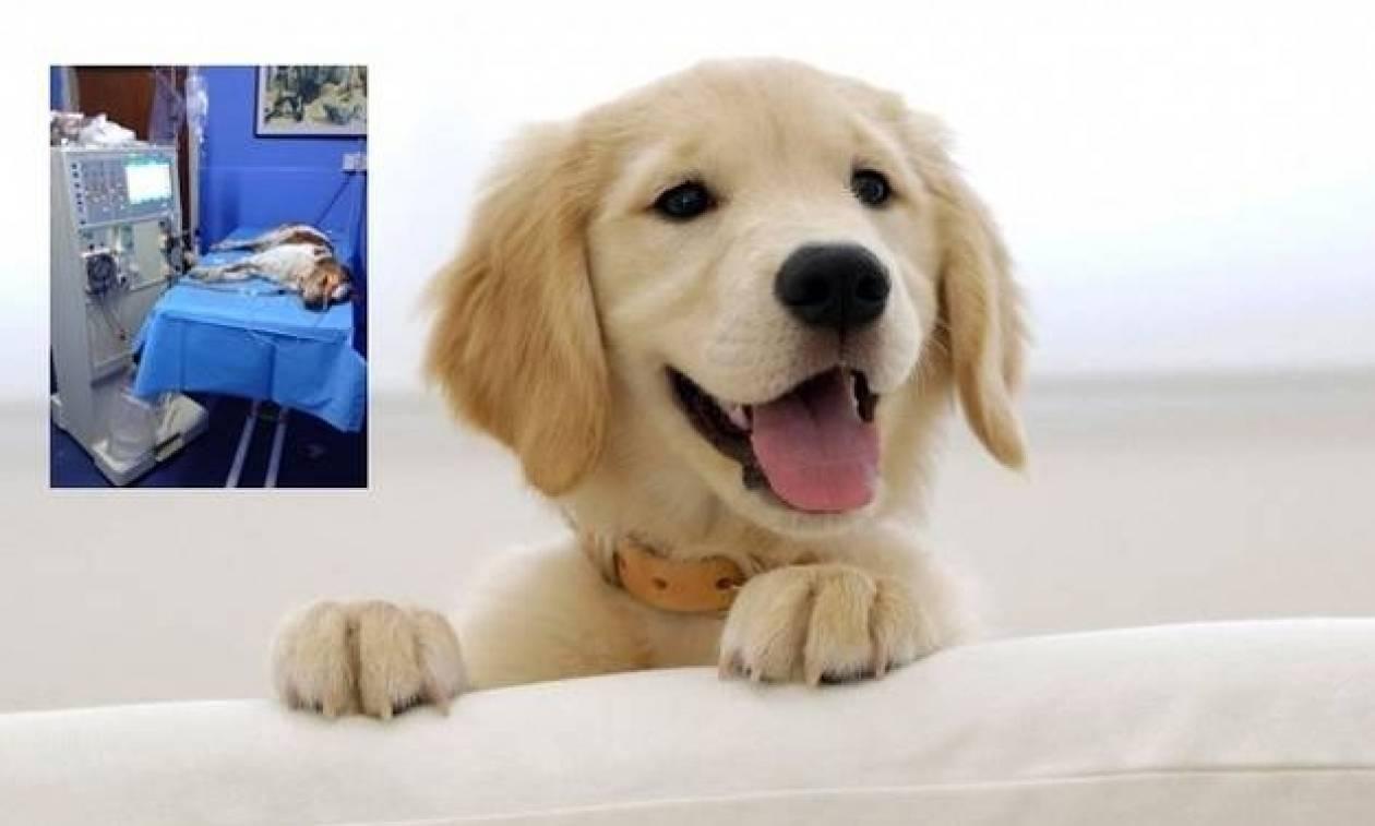 Για πρώτη φορά στην Κύπρο έγινε αιμοκάθαρση σε σκύλο - Δείτε φωτογραφία!