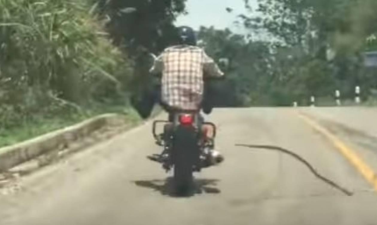 Οδηγός μοτοσικλέτας δέχεται... επίθεση από «ιπτάμενο» φίδι (video)