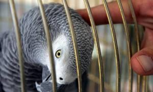 Μαχαίρωσε τη γειτόνισσά του μέχρι θανάτου γιατί εκπαίδευσε τον παπαγάλο της να τον βρίζει! (pics)