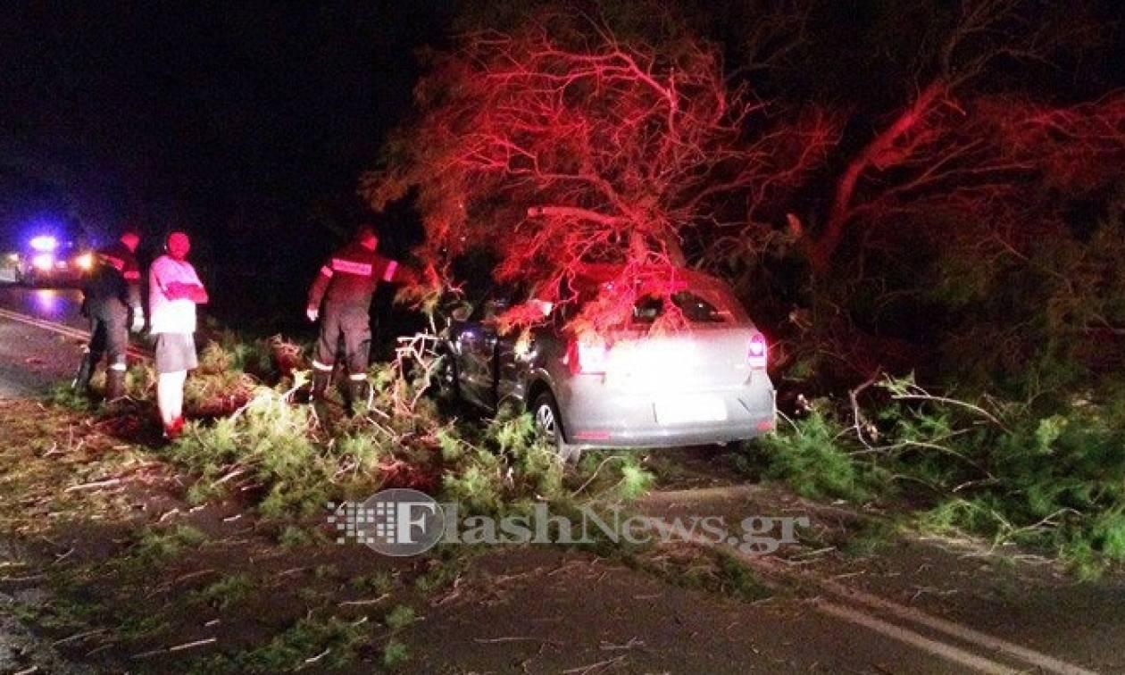 Χανιά: Σώθηκαν από θαύμα! Δέντρο καταπλάκωσε αυτοκίνητο στην εθνική οδό (pics)