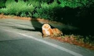 Εμφανίστηκε τίγρης στην Κρήτη; (pic)