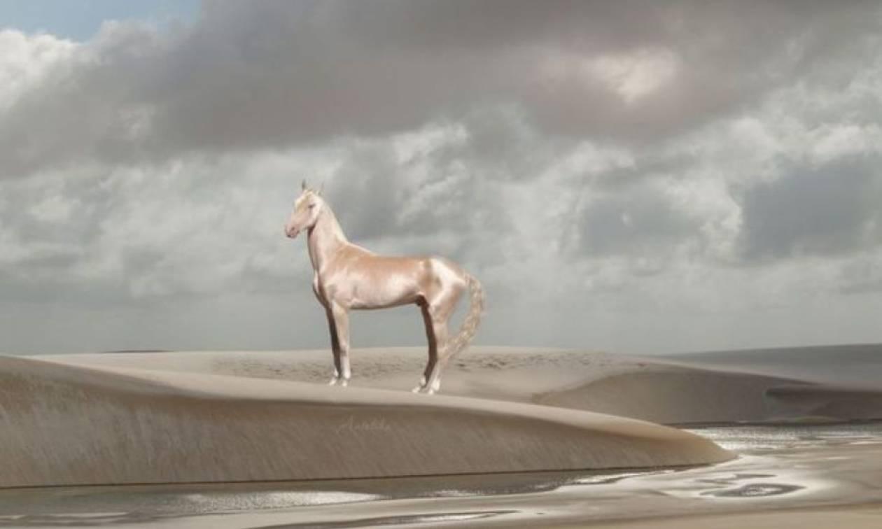 Εντυπωσιακό: Η σπάνια ράτσα αλόγου με το χρυσό χρώμα (pics)