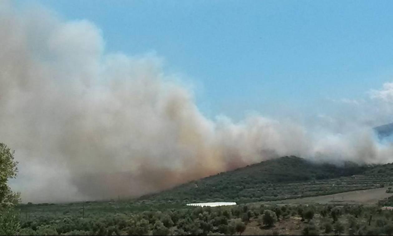 Φωτιά μαίνεται στο Σούλι Λακωνίας