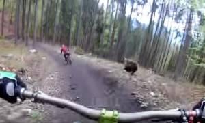 Τρόμος στο δάσος: Πήγαν για ποδηλασία και βρέθηκαν να τους κυνηγά αρκούδα! (vid)
