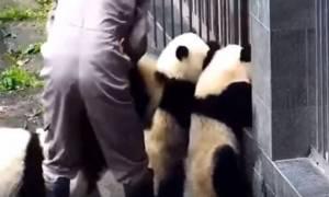 Κίνα: Η... μεγάλη απόδραση των μωρών πάντα! (vid)