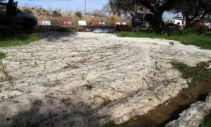 Έβρος: Η χαλαζόπτωση κατέστρεψε ολοσχερώς 30.000 στρέμματα καλλιεργειών