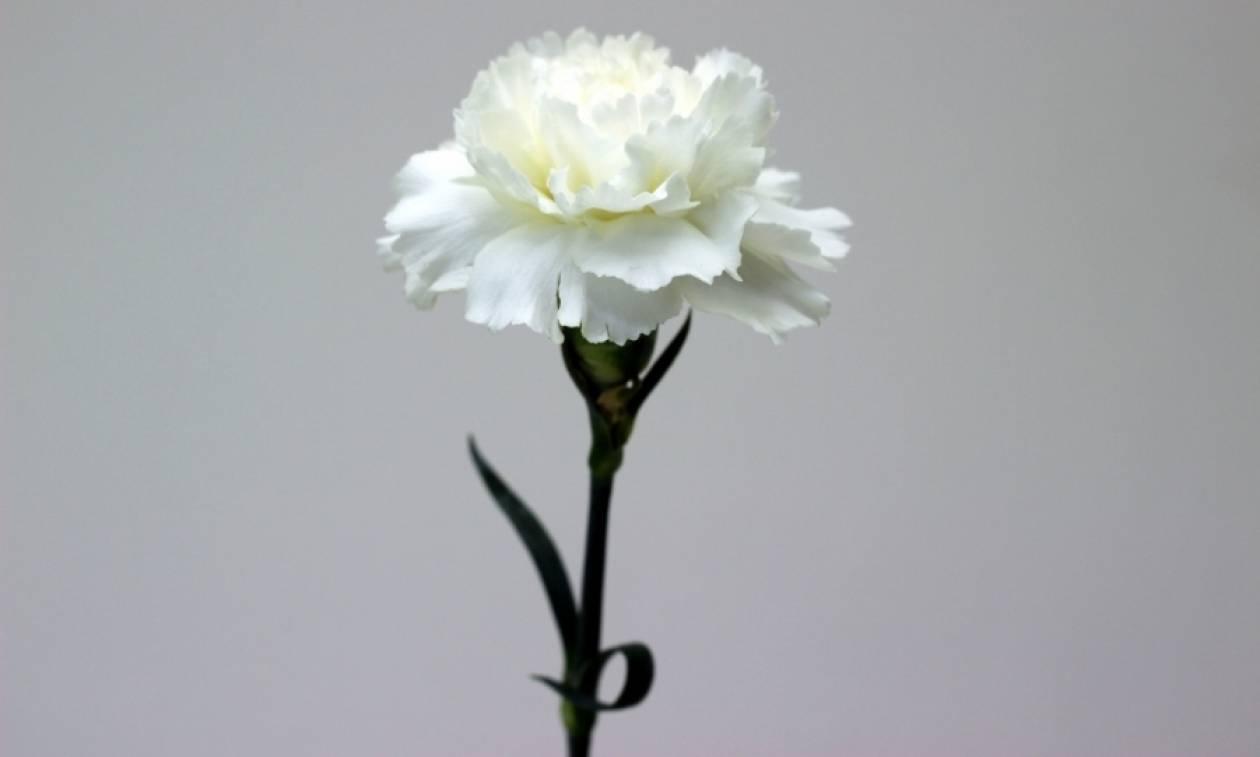 Ημέρα της Μητέρας 2017: Γιατί ένα λευκό γαρύφαλλο αρκεί ως ύμνος στη μητρότητα