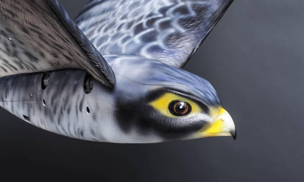 Τι άλλο θα σκεφτούν; Ρομποτικό αρπακτικό θα διώχνει τα πουλιά μακριά από τα αεροπλάνα (Pic)