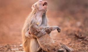 Συγκλονιστική φωτογραφία: Ο πόνος της μάνας για το παιδί της