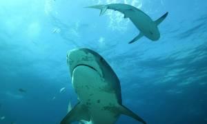 Ανθρωποκυνηγητό για άνδρα που έκανε σεξ με καρχαρία (ΣΚΛΗΡΕΣ ΕΙΚΟΝΕΣ)