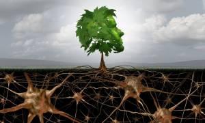Αγγειακή άνοια: Τι είναι και πώς θα προστατευθείτε