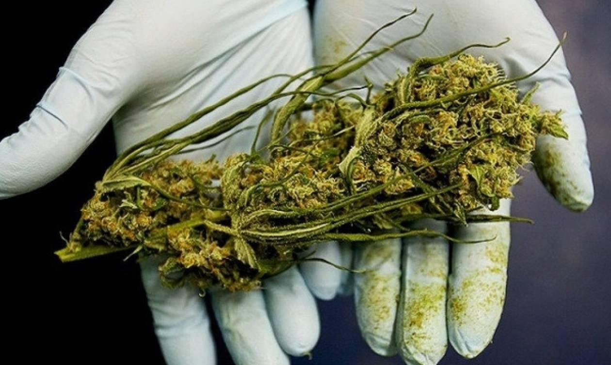 Ηράκλειο: Συνελήφθη 34χρονος για κατοχή φυτών κάνναβης
