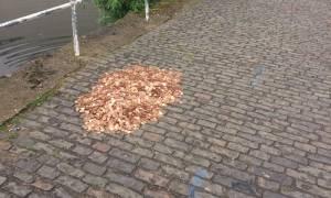 Άφησαν ένα «βουνό» από 15 χιλιάδες νομίσματα στο δρόμο και αυτό που συνέβη θα σας εκπλήξει (Pics)