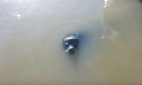 Τρομακτικό βίντεο: Θαλάσσιο λιοντάρι αρπάζει κοριτσάκι και το ρίχνει στο νερό