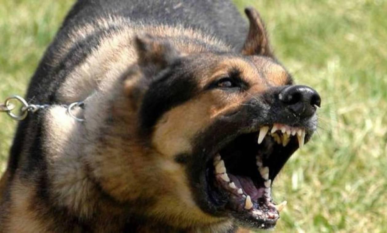 ΣΟΚ στην Θήβα από άγρια επίθεση σκύλου σε ηλικιωμένο (pics&vid)