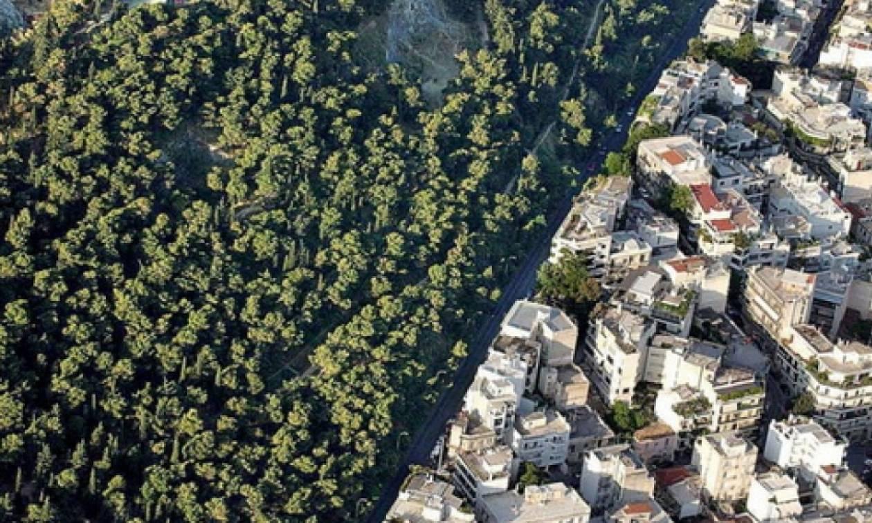 ΣτΕ: Παράνομο το κτηματολόγιο αν δεν καταρτιστούν πρώτα δασικοί χάρτες