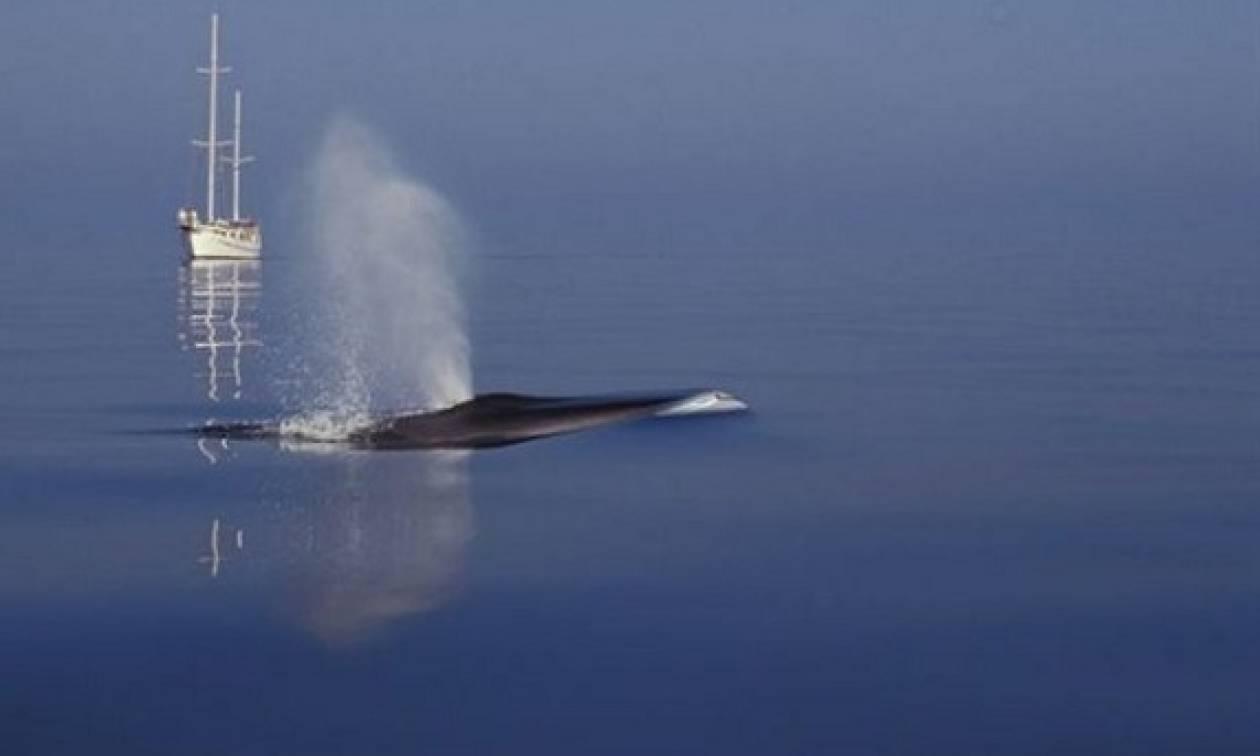 Αναστάτωση στη Σύρο: Φάλαινα 12 μέτρων κολυμπούσε στο λιμάνι! (photos)