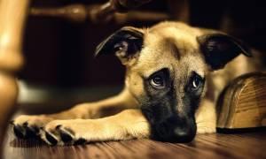 Δημιουργήθηκε το πρώτο σύστημα τεχνητής νοημοσύνης που κάνει διάγνωση του πόνου σε ζώα