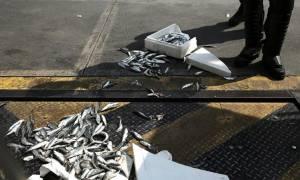 Γέμισε ψάρια η Βουλή! Πέταξαν σαρδέλες στους βουλευτές