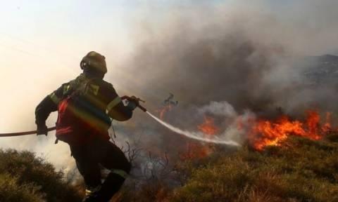 На Кипре произошел крупный лесной пожар