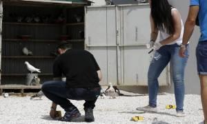 Τρόμος για τη νέα αδέσποτη σφαίρα στο Μενίδι - Παρέμβαση εισαγγελέα