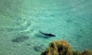 Τρόμος: Είναι η στιγμή που ένας τεράστιος καρχαρίας βγαίνει στην ακτή πασίγνωστης παραλίας (vid)