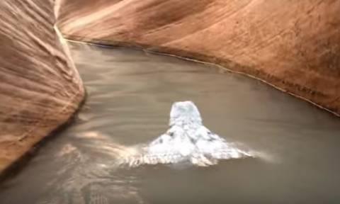 Σπάνιο βίντεο: Κουκουβάγια κολυμπάει για να σώσει τη ζωή της!